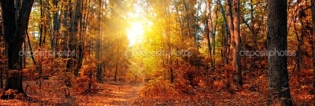 Panoramic Wallpaper Fall Autumn Forest Panorama Stock Photo 169 Juliasha 5014553