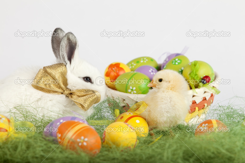 Cute Baby Pets Live Wallpaper Download Small Baby Chicken Looking At A Cute White Rabbit With