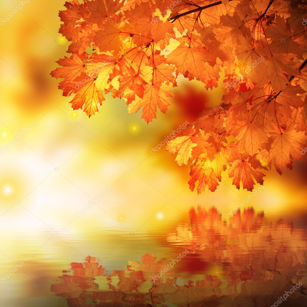 Falling Leaves Animated Wallpaper Abstract Autumn Maple Reflection Stock Photo