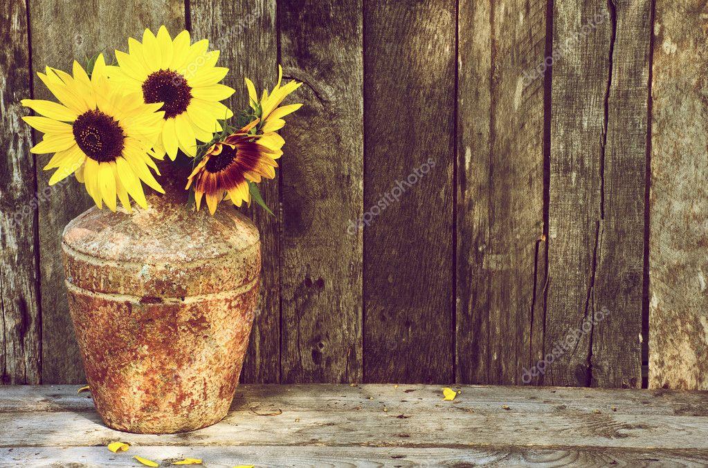 Fall Sunflower Desktop Wallpaper Sunflower Still Life Stock Photo 169 Kellyplz 5344204