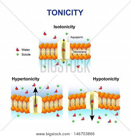 Tonicity and osmosis Cell membrane and aquaporin Effect of