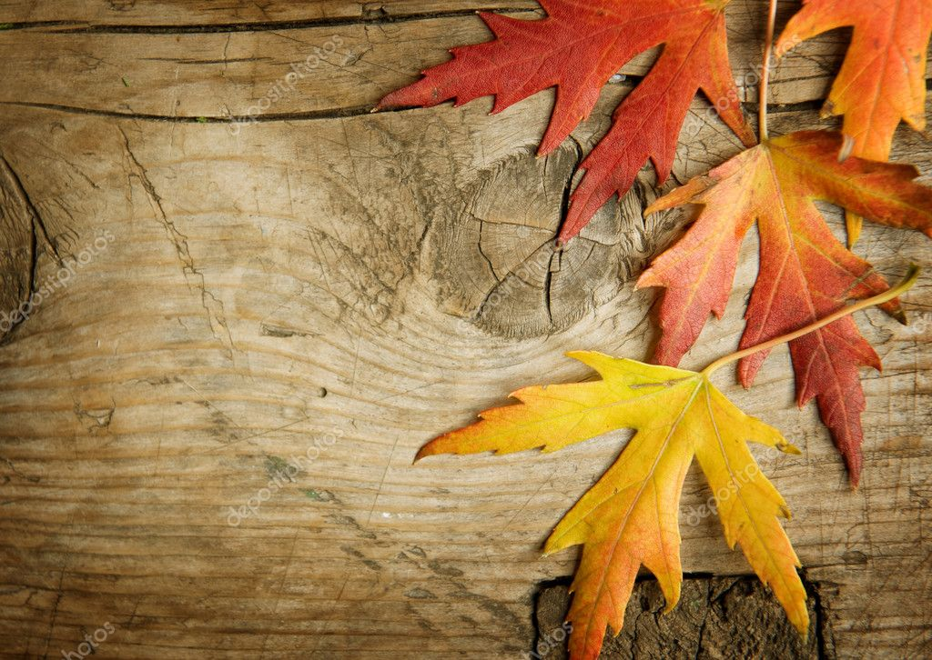 Fall Leaves And Pumpkins Wallpaper Autumn Leaves Over Wood Background With Copy Space
