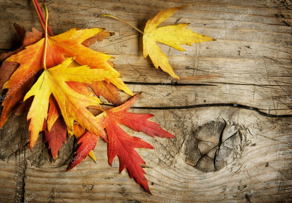 Autumn Fall Live Wallpaper Autumn Leaves Over Wooden Background With Copy Space
