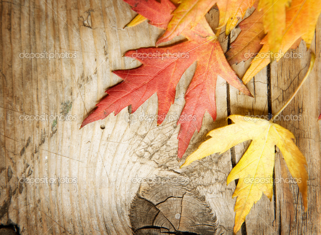 Wallpaper Leaves Falling Autumn Leaves Over Wood Background With Copy Space