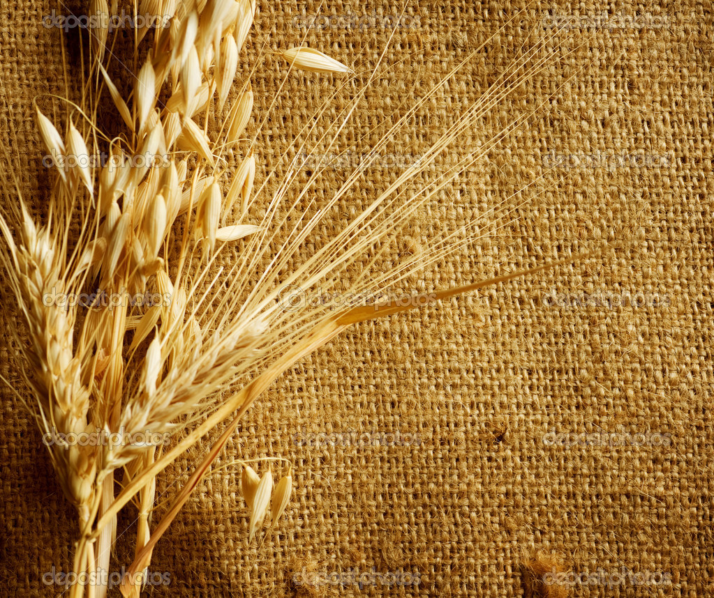 Hd Wallpaper Texture Fall Harvest Wheat Ears Border On Burlap Background Stock Photo