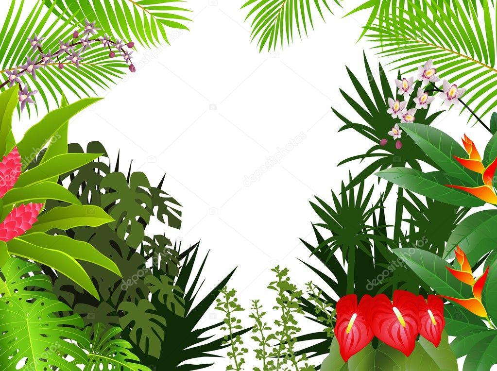 Bird Of Paradise Hd Wallpaper Fundo De Linda Floresta Tropical Vetor De Stock
