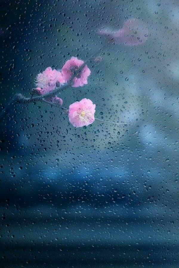 Cute Rainy Weather Wallpapers Beautiful Rain Wallpapers For Cool Whatsapp Status And