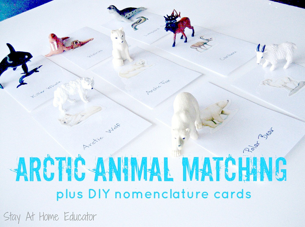 Arctic Animal Matching - Stay At Home Educator