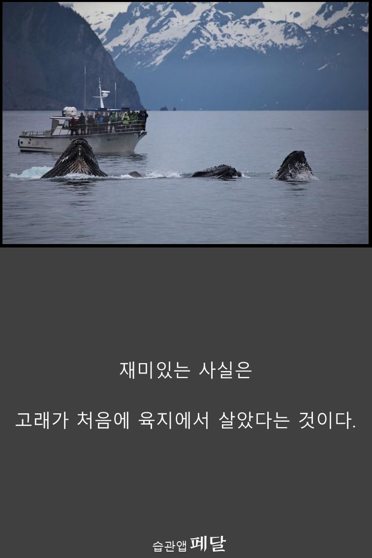 whale_9
