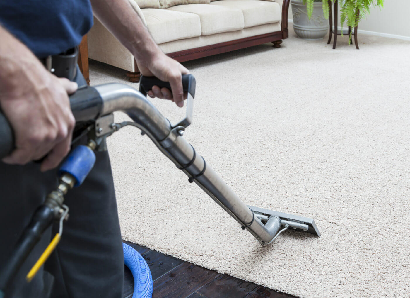 Carpet Cleaning Carpet Cleaning Steam Green