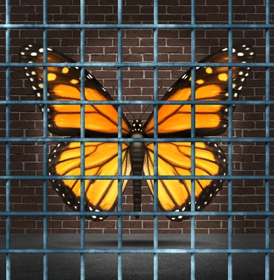 how potential remains hidden caged butterfly