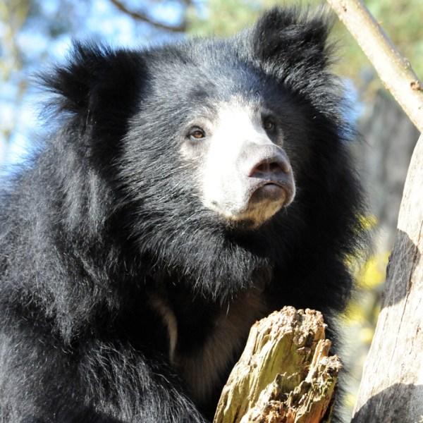 Woodland Park Zoo 3-24-14