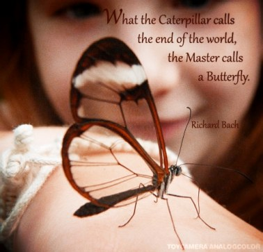 RB quote - Butterfly_effected