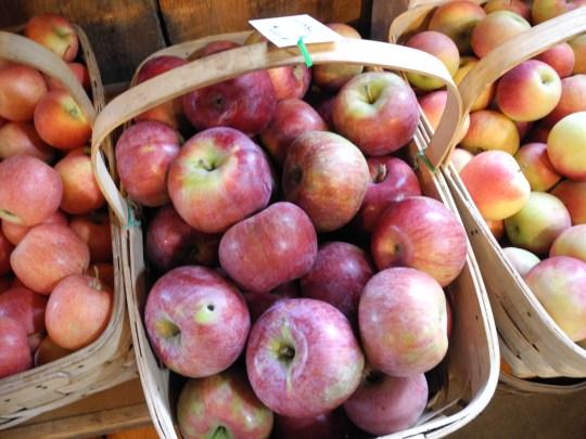 Bushels of Love (and apples)
