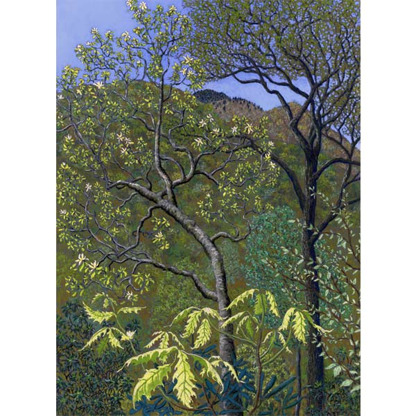 Bloomsong of the Grandmother Tree, a pastel painting by Stephanie Thomas Berry