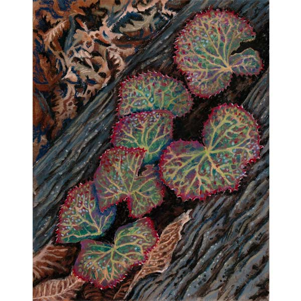 Galaxy Growing in a Hemlock Log, a pastel painting by Stephanie Thomas Berry