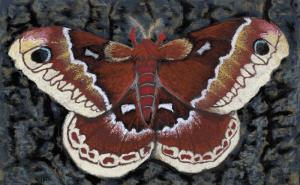 Promethea, a pastel by Stephanie Thomas Berry of a Promethea moth