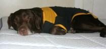 I LOVE My NECTAR Sleep Mattress!!