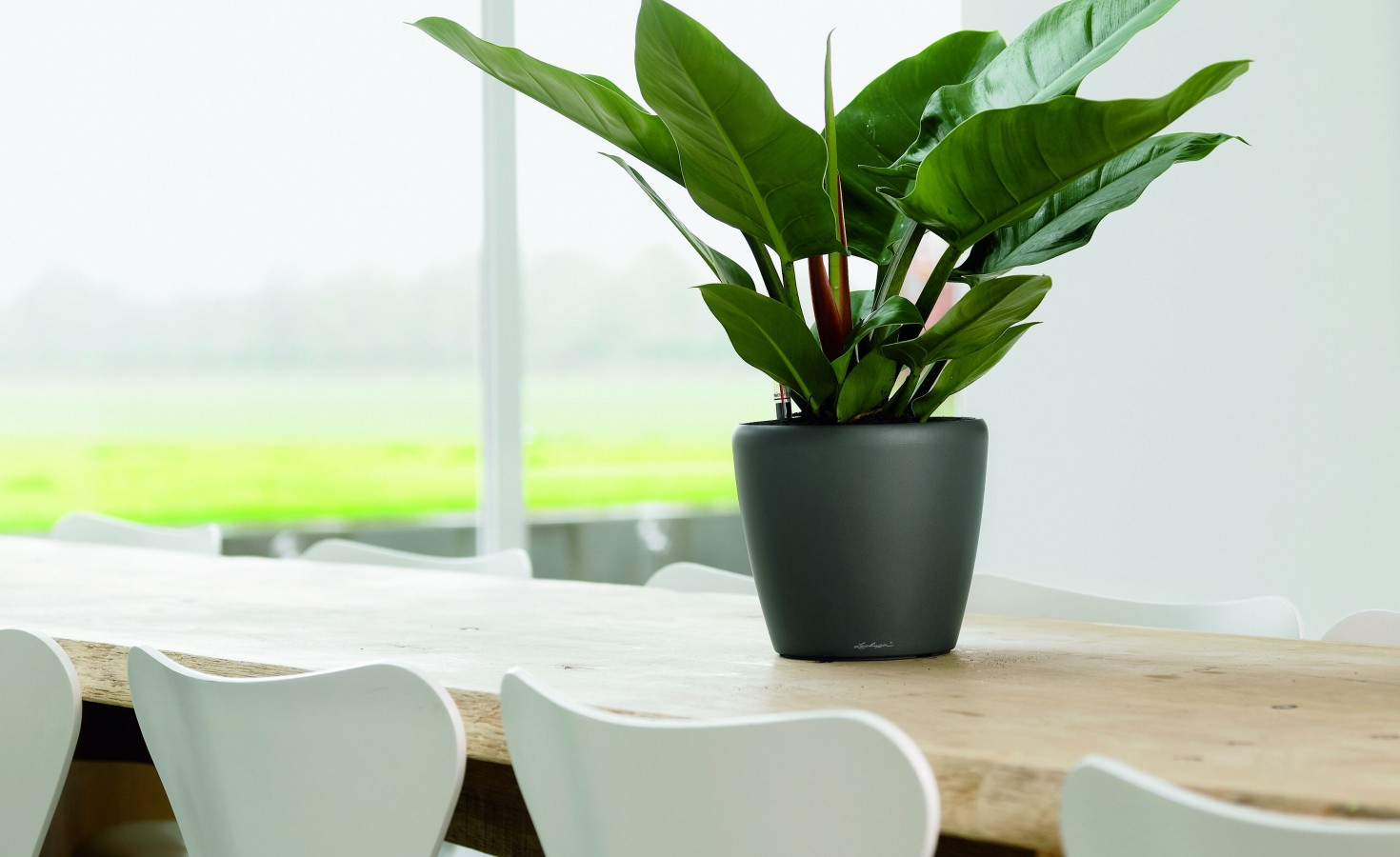 Indoor Plants For The Office Way To Choose The Best Indoor Plants For Your Office Firm