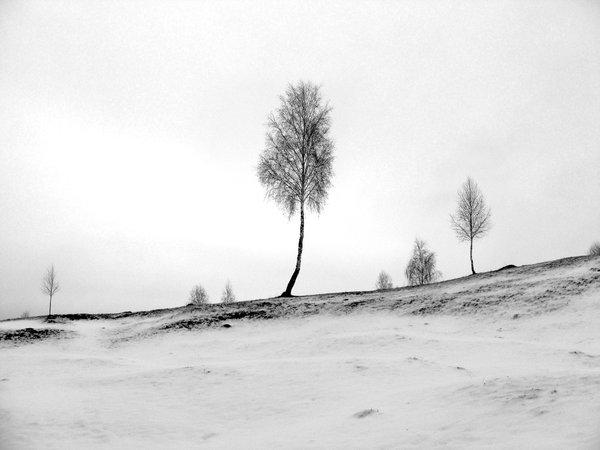 Drawing_a_sad_winter__by_Catabu-2