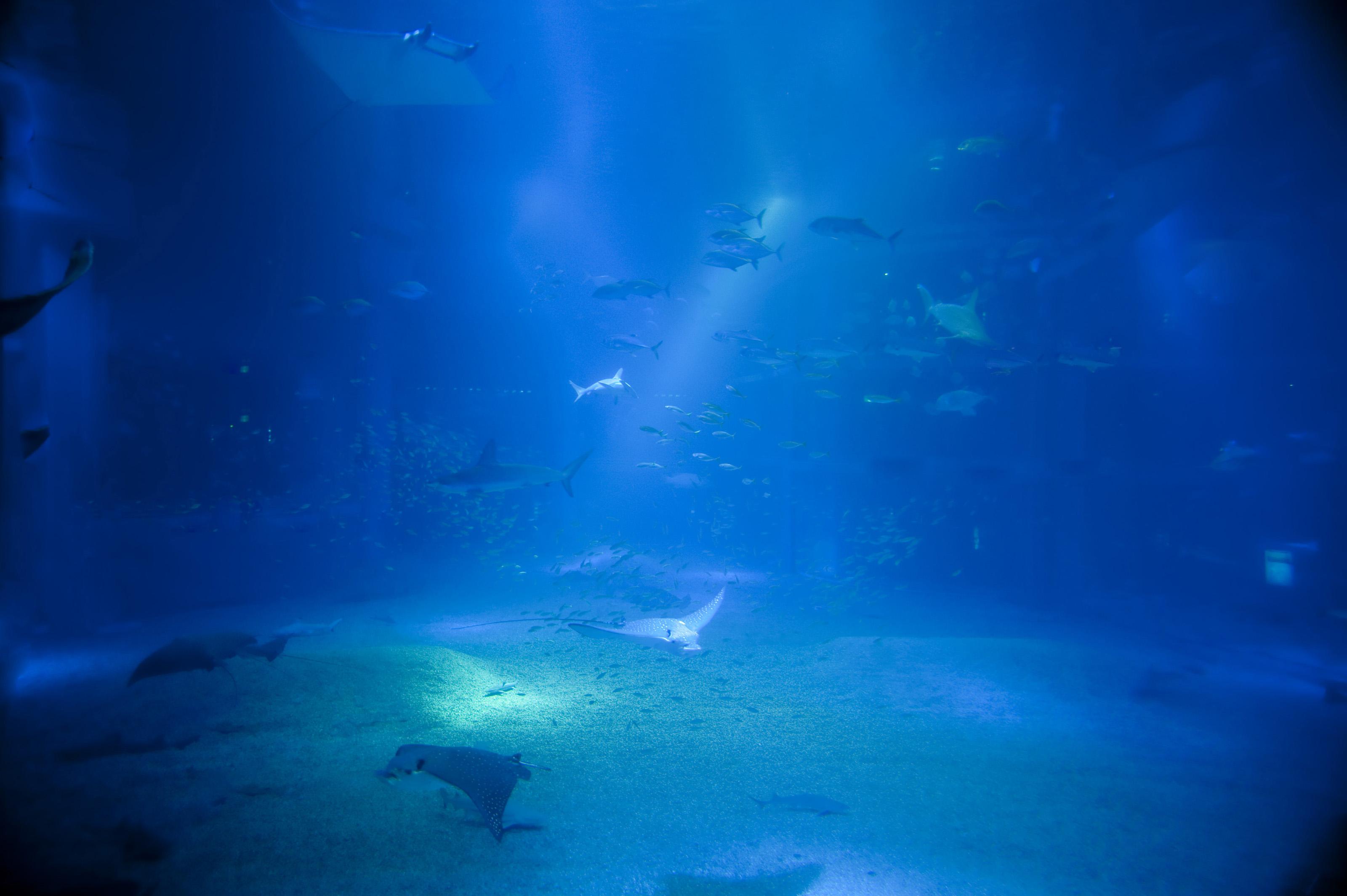 3d Fish Tank Wallpaper Deep Blue Sea 6716 Stockarch Free Stock Photos