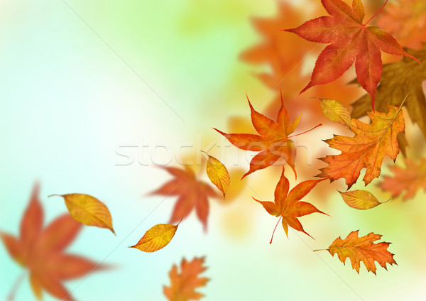 Wallpaper Border Falling Off Autumn Leaves Falling Stock Photo 169 James Thew Solarseven