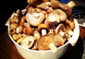 Где можно собирать грибы в Стокгольме?
