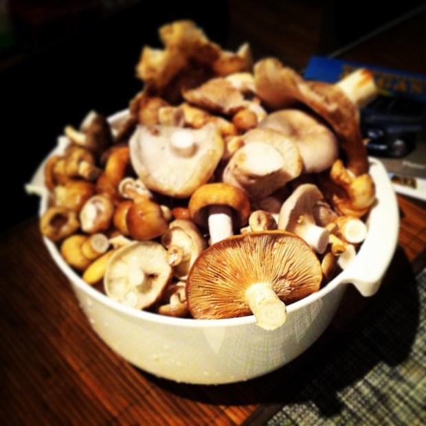 грибы в швеции