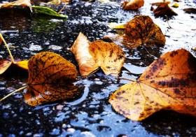 Пришла осень!