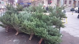 елка на рождество в стокгольме