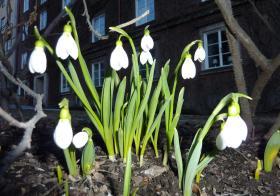 Ранняя весна в Стокгольме