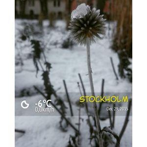 первый снег в Стокгольме, декабрь 2015