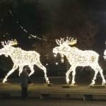 Рождественские лоси в Стокгольме