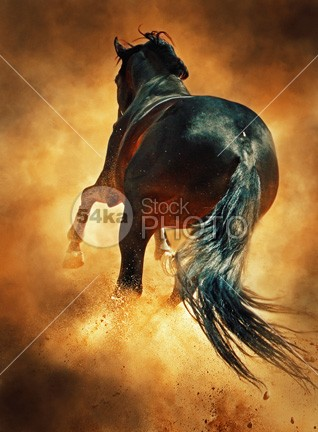 Silver Animal Print Wallpaper Galloping Horse In Dust Cloud Photography Equestrian