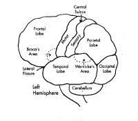 brainsections9a.jpg