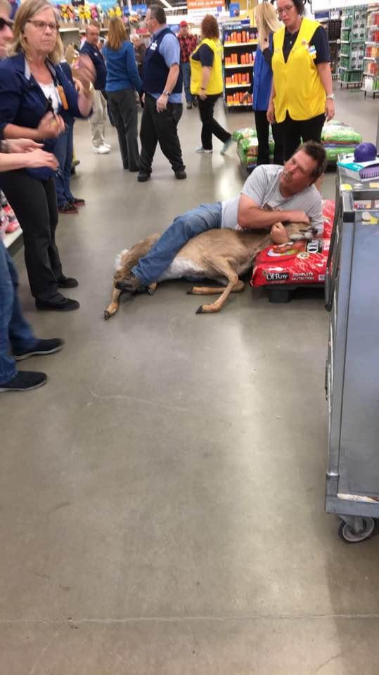 Deer causes stir inside Wadena, Minn Walmart News The Mighty