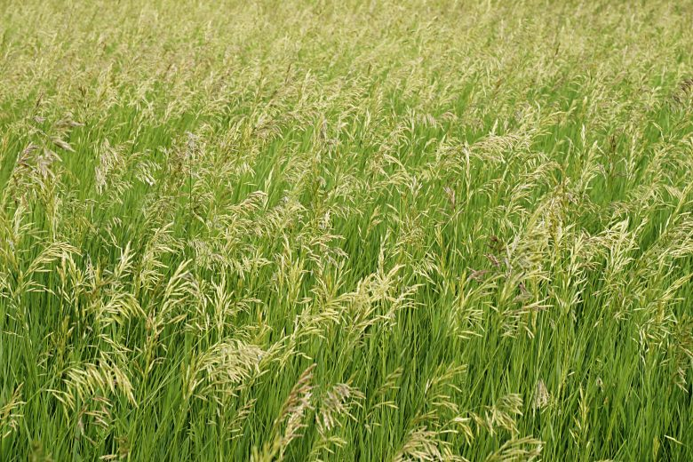 Free Green Field Plants Nature Texture Texture - L+T