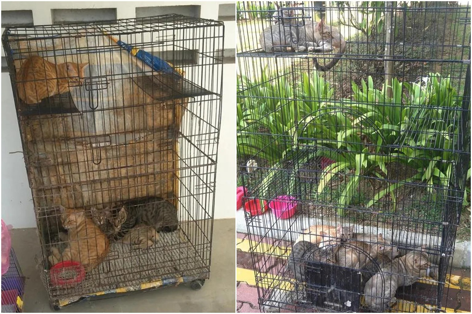 Cat Cage Gumtree Ava Investigating After 16 Cats Left In Cages In Punggol