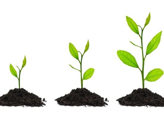 grow-three-sprouts-1vtyryx