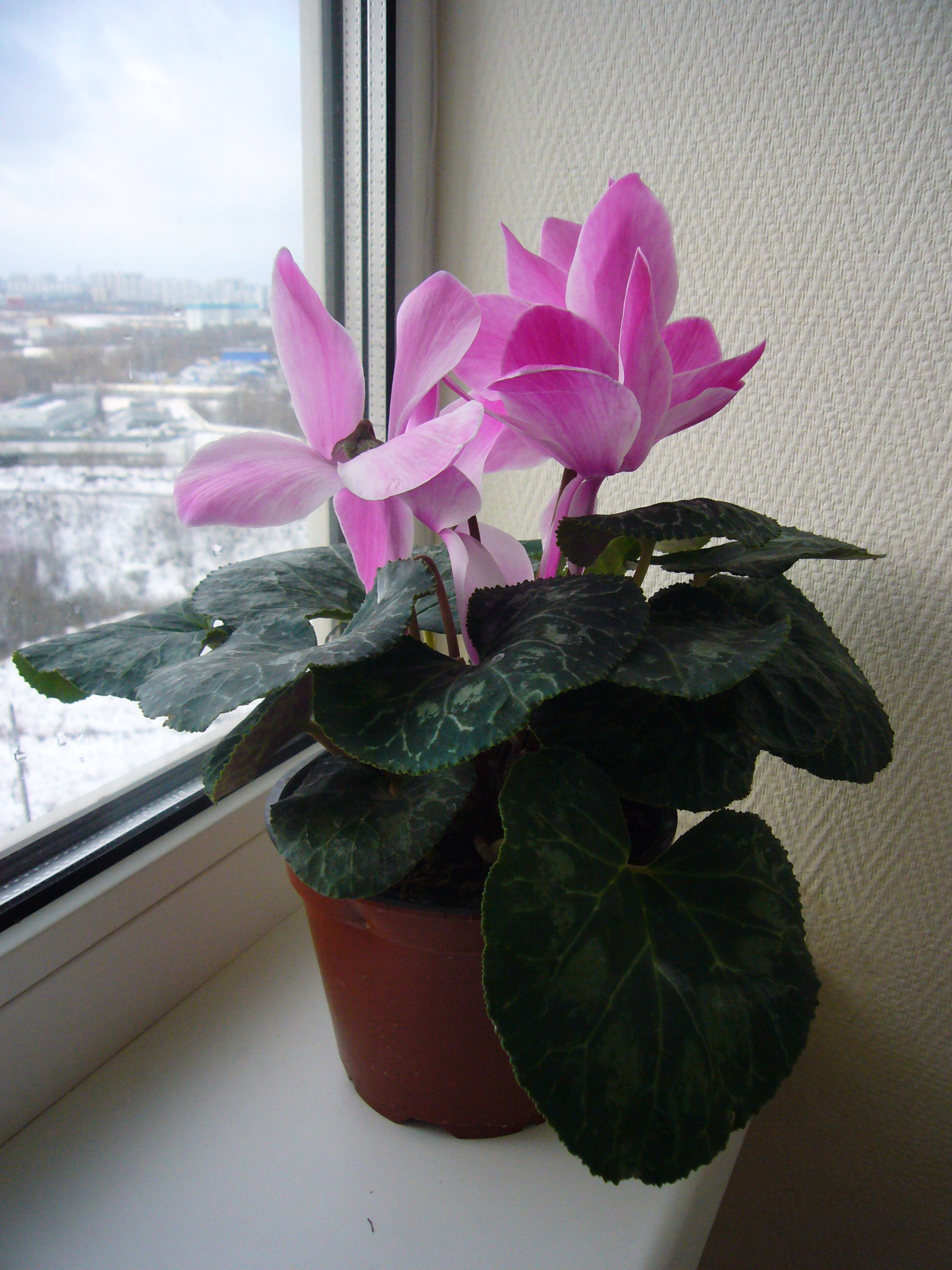 Small House Plants With Flowers Benefits Of Using Houseplants To Your Home Decor