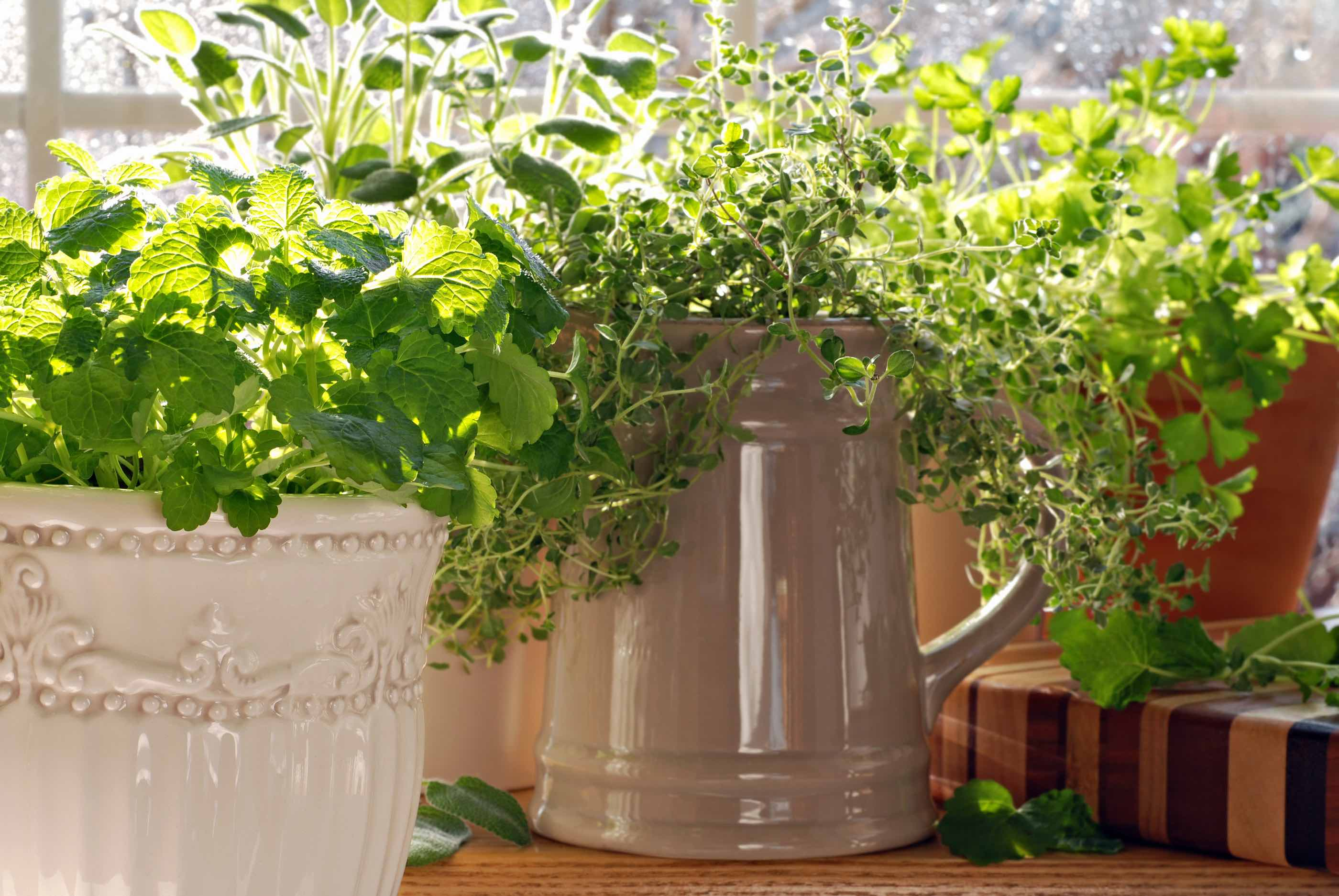 Herb Pots Kitchen How To Get The Most Mileage Out Of Your Herb Garden