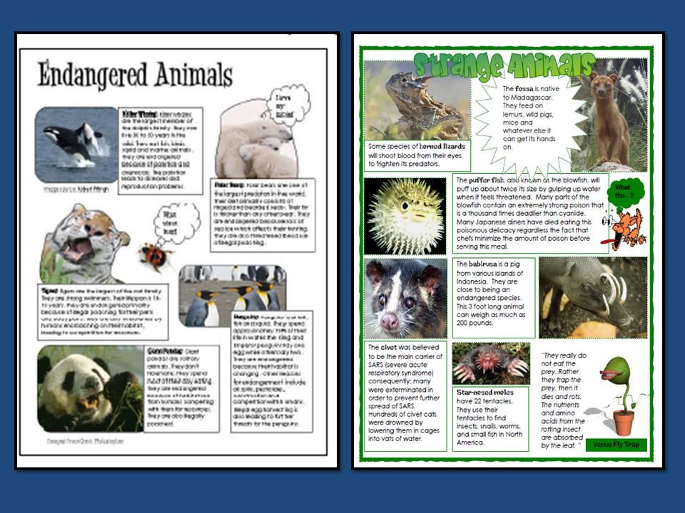 Microsoft Word - Animal Poster - Straub Technology World