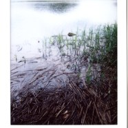 Instant Photographs, Old Lyme Ct. 2