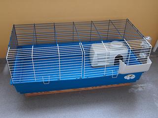 Guinea pig gear