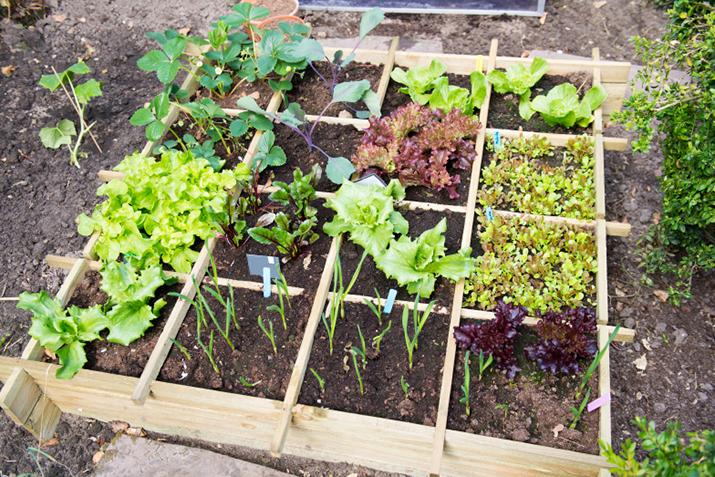 Designing Your Own Vegetable Garden Co+op, stronger together - designing your garden