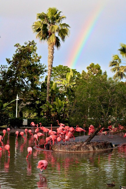 Flamingoes, Sea World, San Diego, Travel