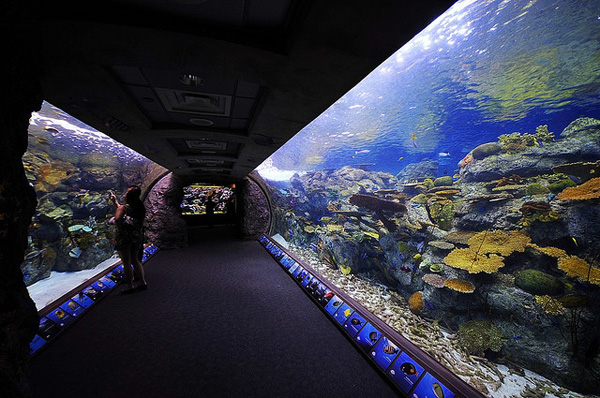 aquarium of the pacific one of the largest and best aquariums in the