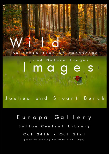 wild_images_exhibition_europa_gallery_sutton_Surrey