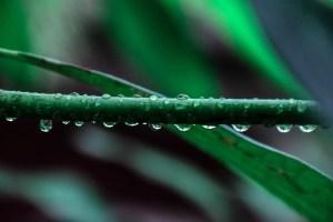 pexels-photo-52851 (1)