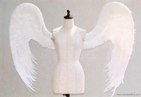 wing040-f